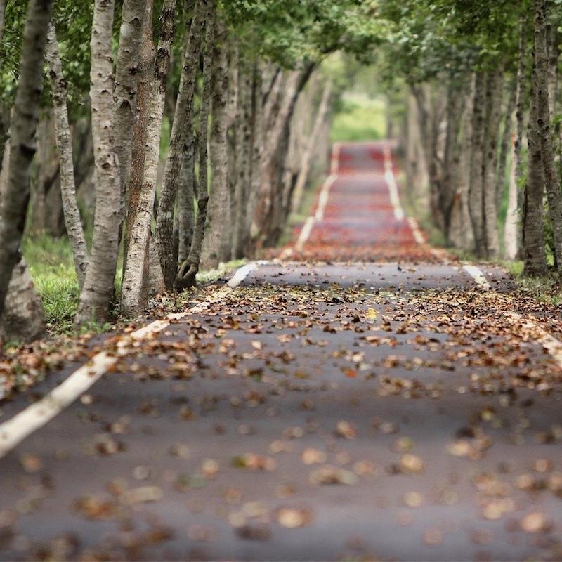 Photo : https://pixabay.com/fr/photos/avenue-arbres-route-bord%C3%A9e-d-arbres-656969/